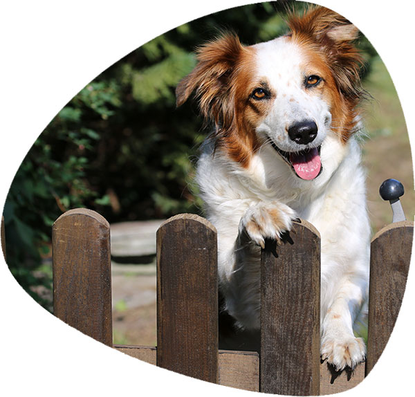 Cane in attesa del cibo MaoriPet con consegna a domicilio